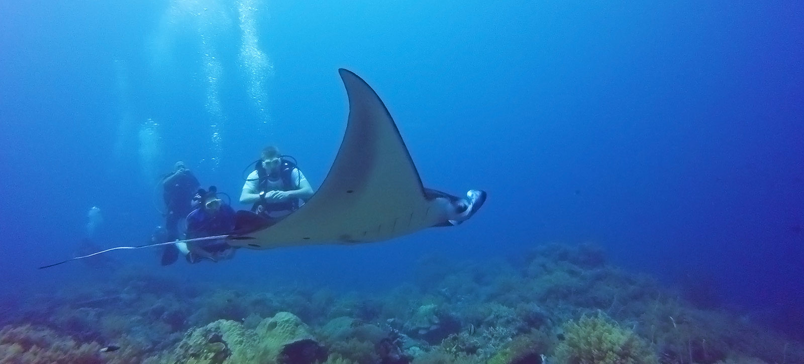 liveaboard scuba diving trips in the Philippines