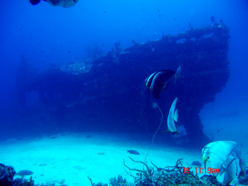 coron liveaboard diving trips