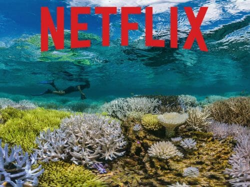 Best Ocean Documentaries Streaming on Netflix