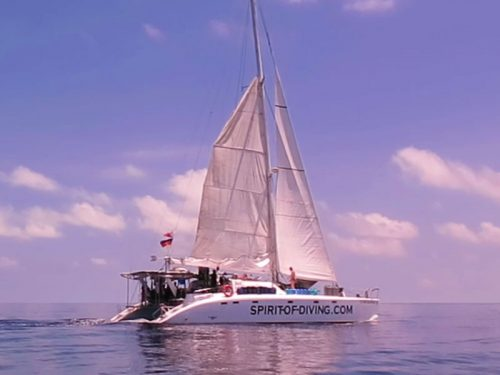 liveaboard diving catamaran flying dolphin III philippines