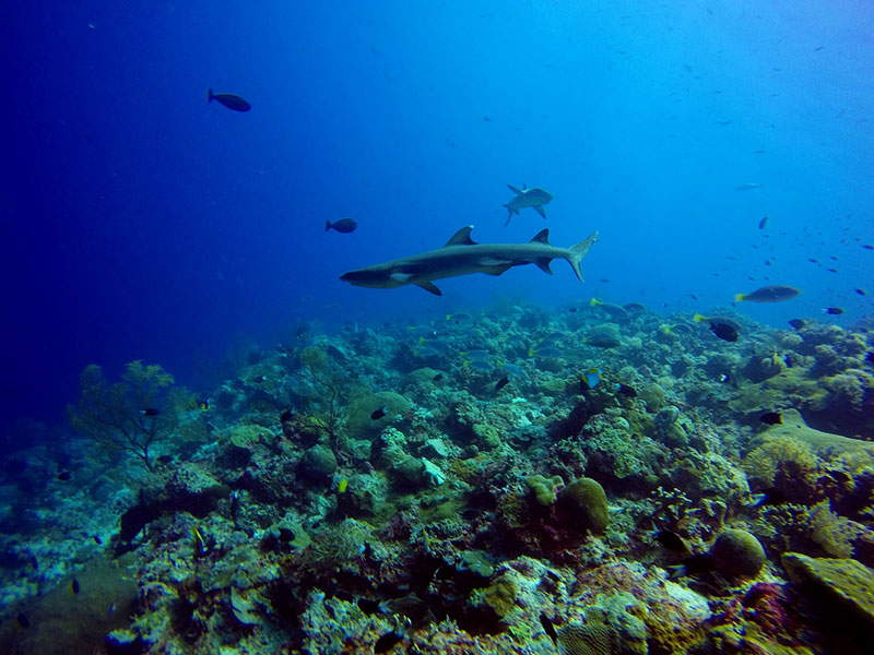 tubbataha reef apo reef liveaboard diving trips philippines