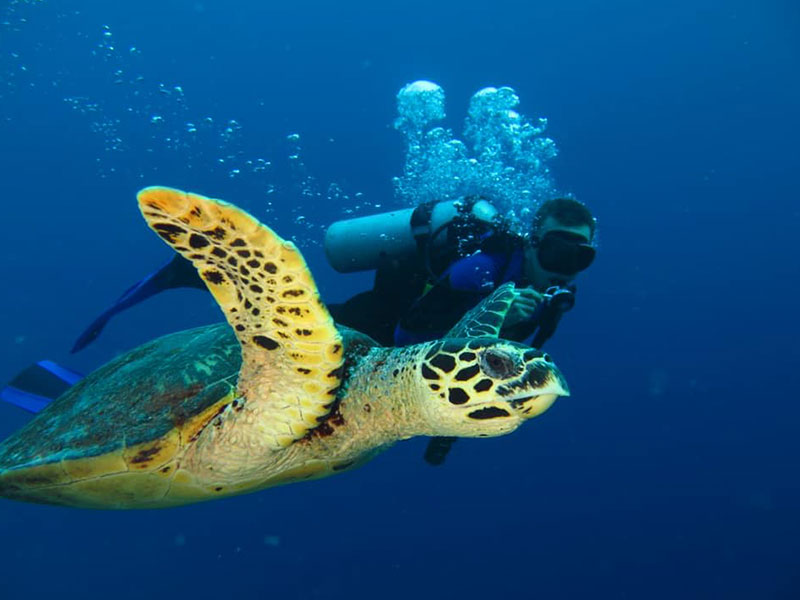 liveaboard diving apo reef philippines